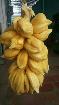 这是一张关于榴莲蜜  好吃好香又好甜。的产品图片