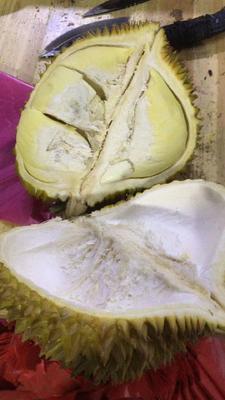 这是一张关于金枕头榴莲 2公斤以下 90%以上 的产品图片