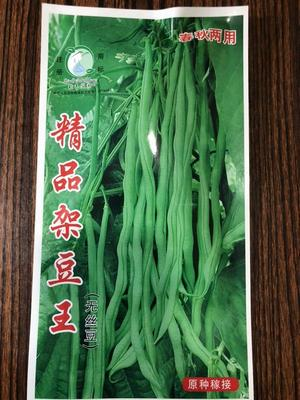 河北省保定市定州市架豆王  ≥97% 精品架豆王