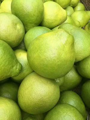 广东省梅州市梅县区沙田柚 1斤以上