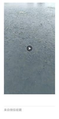 安徽省安庆市宜秀区池塘草鱼 人工养殖 0.25-1公斤
