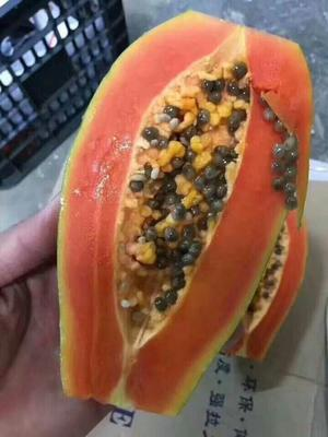 云南省昆明市官渡区红心木瓜 1.5 - 2斤