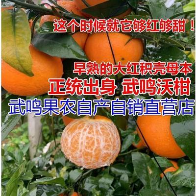 这是一张关于沃柑 6 - 6.5cm 3两以上 的产品图片