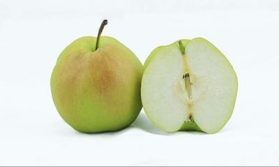 这是一张关于玉露香梨树苗 1~1.5米 的产品图片