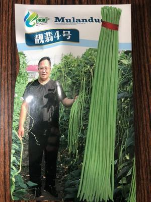 河北省保定市定州市长青豆角种子   靓翡4号