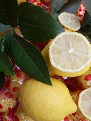 这是一张关于黄柠檬 3.3 - 4.5两 的产品图片