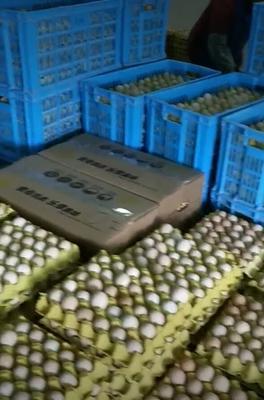 贵州省黔南布依族苗族自治州长顺县土鸡蛋 食用 箱装