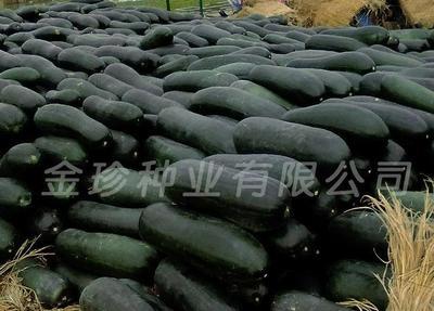 四川省凉山彝族自治州甘洛县冬瓜种子 原种 ≥70%