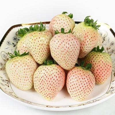 广东省广州市天河区白雪草莓  20克以下 25粒单果12-15