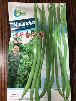 河北省保定市定州市架豆王万斤青2 ≥97%