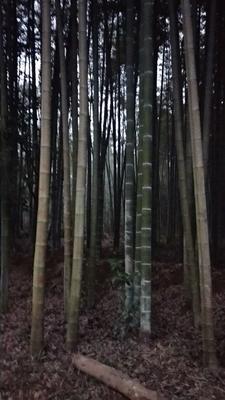 湖南省益阳市资阳区楠竹
