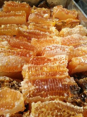 这是一张关于土蜂蜜 塑料瓶装 100% 1年 的产品图片