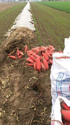 广西壮族自治区河池市都安瑶族自治县红皮萝卜 0.2~1斤