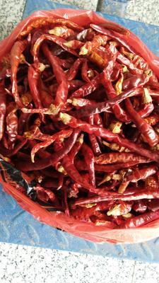 这是一张关于艳红辣椒 15~20cm 中辣 红色 的产品图片