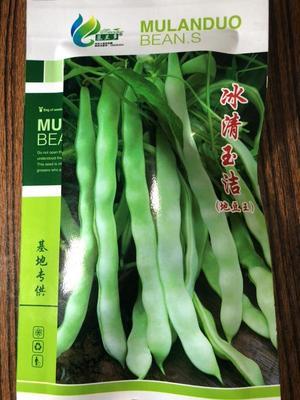 河北省保定市定州市无筋豆    ≥97% 冰清玉洁