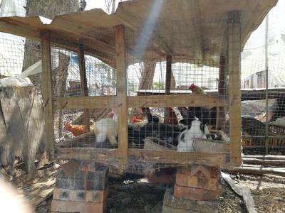 海南省海口市龙华区肉兔 5斤以上