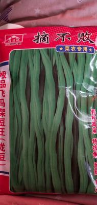 河南省周口市扶沟县早佳8424西瓜种子 亲本(原种) ≥97%