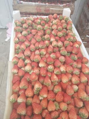 安徽省合肥市长丰县红颜草莓 20克以上