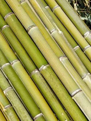 这是一张关于竹竿 的产品图片