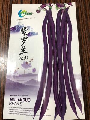 河北省保定市定州市紫地豆子紫罗兰 ≥97%
