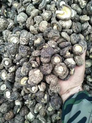 甘肃省陇南市康县原木干香菇 散装 1年