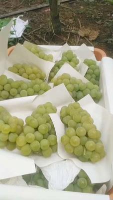 这是一张关于水晶葡萄 0.6-0.8斤 10%以下 1次果 的产品图片
