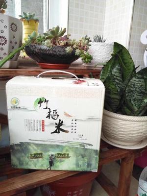 吉林省四平市铁西区竹稻米 一等品 一季稻 粳米