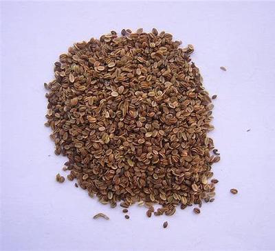 这是一张关于蛇床子 的产品图片