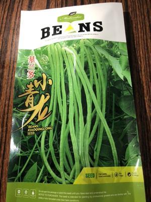 河北省保定市定州市地豇豆    ≥97% 小青龙