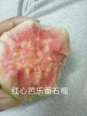 广西壮族自治区北海市合浦县红心芭乐 250-300克