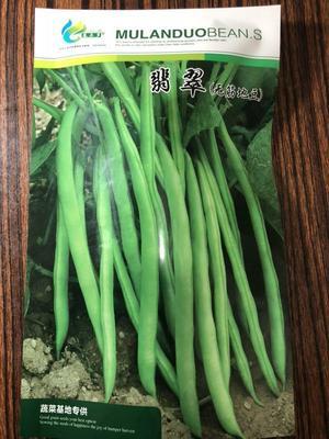 河北省保定市定州市地芸豆种子  ≥97%