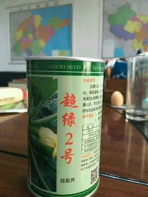 山东省潍坊市寿光市超绿2号西葫芦种子