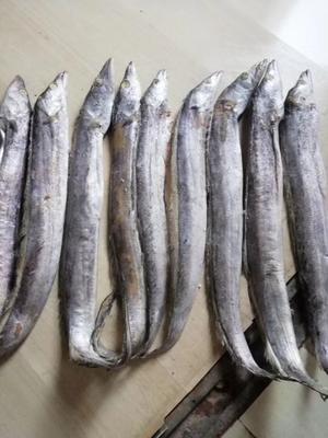 黑龙江省哈尔滨市呼兰区巴基斯坦带鱼 野生 0.5公斤以下