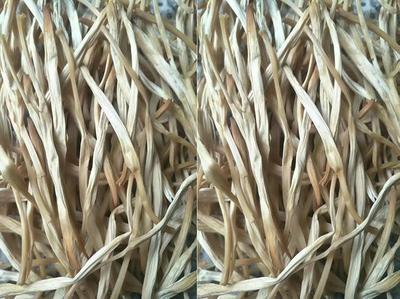 这是一张关于西闫黄花菜 一级 袋装 的产品图片