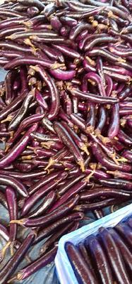 广东省惠州市惠城区紫长茄 混装通货 长茄