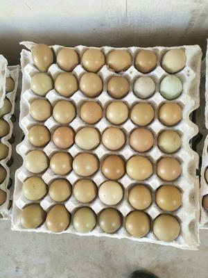 这是一张关于七彩山鸡蛋 食用 箱装 的产品图片