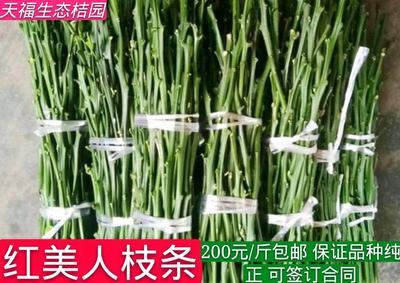 湖南省怀化市芷江侗族自治县红美人柑桔 4.5 - 5cm 3两以上
