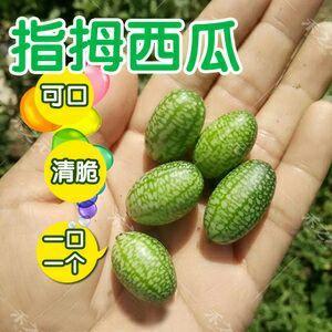山东省聊城市莘县拇指西瓜 1斤打底 9成熟 1茬 有籽
