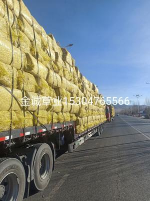 内蒙古自治区赤峰市敖汉旗牧草