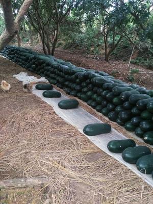 这是一张关于黑皮冬瓜 20~30斤 吊冬瓜 的产品图片
