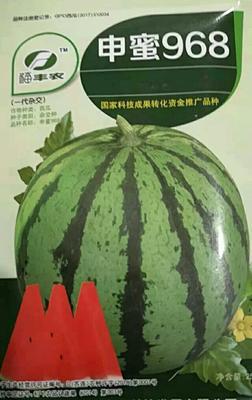 河南省商丘市睢阳区申蜜968 二倍体杂交种 ≥85%