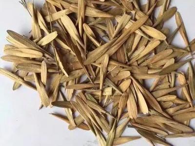 这是一张关于白蜡种子 的产品图片