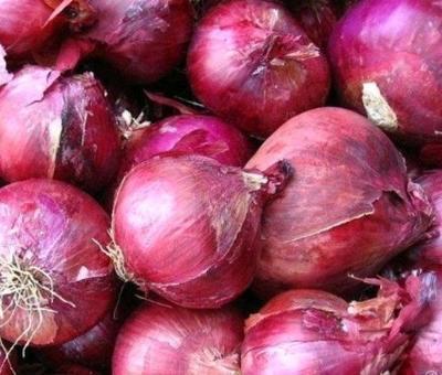 山东省济宁市金乡县二红洋葱  8~9cm 大促销,保质保量。