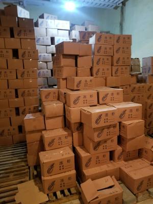 江苏省连云港市赣榆区南美白对虾 人工殖养 9钱以上