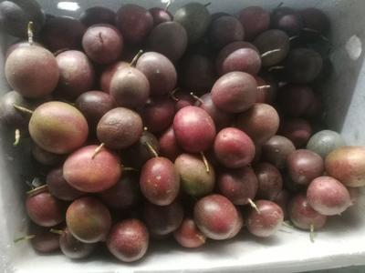 云南省大理白族自治州大理市紫色百香果 80 - 90克