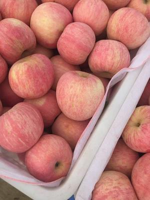 山东省临沂市沂水县红富士苹果 80mm以上 片红 纸袋