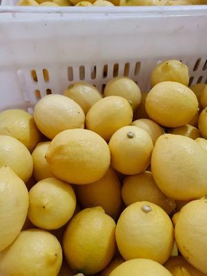 四川省资阳市安岳县尤力克柠檬 3.3 - 4.5两