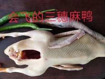 这是一张关于三穗鸭 2-3斤 统货 全散养 的产品图片