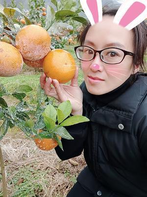 广西壮族自治区河池市宜州市茂谷柑 统货 4两以上