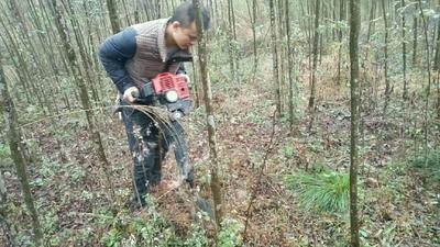 重庆秀山土家族苗族自治县垂柳